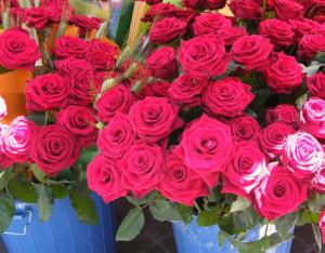 rosarosa-rojo