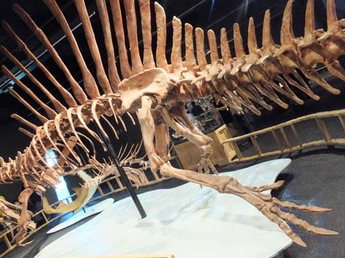spinosaurus-5