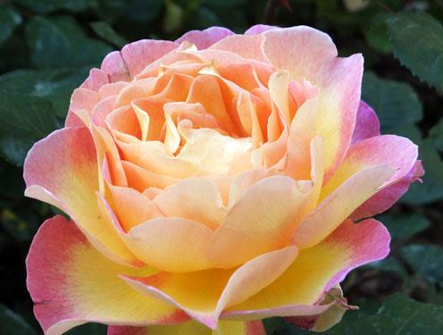 2017-rosas-concurso-1