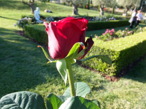 2017-rosas-concurso-3